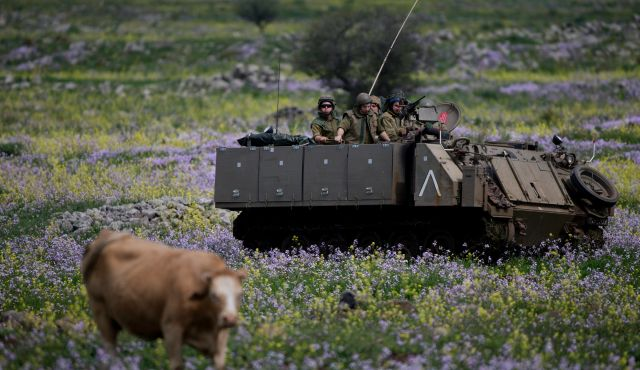 Israeli soldiers drive on an armored personnel carrier past a cow during training in the Israeli-controlled Golan Heights, near the border with Syria Monday, March 9, 2015. Photo by AP
