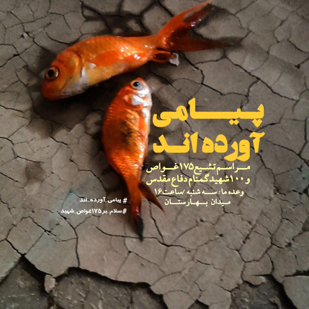 A collection of posters in memorial of 175  Iranian martyr divers (19)
