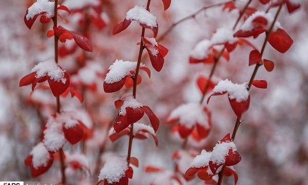 First Snow in Tabriz