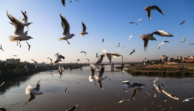 First Group of Migratory Birds Arrive in Iran's Karun River